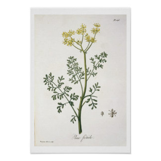 Rue from 'Phytographie Medicale' by Joseph Roques Posters