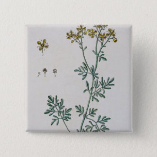 Rue, plate 7 from 'A Curious Herbal', published 17 Button