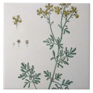 Rue, plate 7 from 'A Curious Herbal', published 17 Ceramic Tile