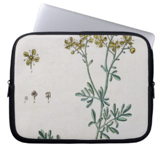 Rue, plate 7 from 'A Curious Herbal', published 17 Laptop Sleeve