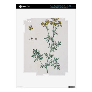 Rue, plate 7 from 'A Curious Herbal', published 17 Skins For iPad 3