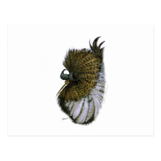 ruff wild bird, tony fernandes postcard