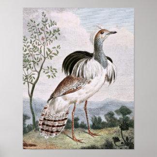 Ruffed Bustard Bird Art Poster