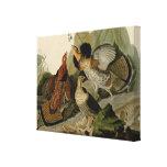 Ruffed Grouse by John Audubon Canvas Print