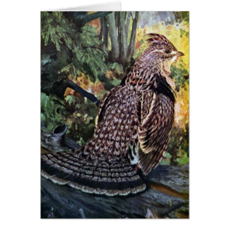 Ruffed Grouse in the Forest Card