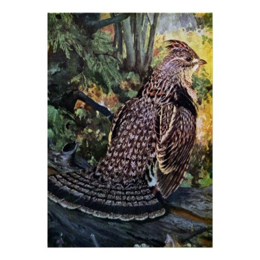 Ruffed Grouse in the Forest Poster