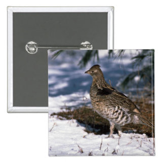 Ruffed grouse standing in snowy woods pins