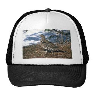Ruffed grouse standing in snowy woods trucker hat