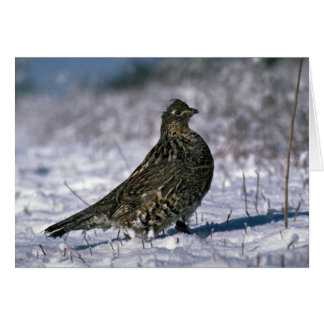 Ruffed grouse standing on snowy ground greeting card