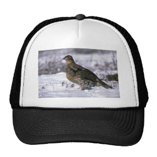 Ruffed grouse standing on snowy ground trucker hat