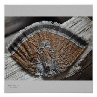 Ruffed Grouse Tail On Wood Poster