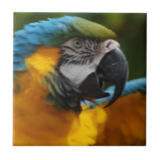 Ruffled Blue and Gold Macaw Ceramic Tile