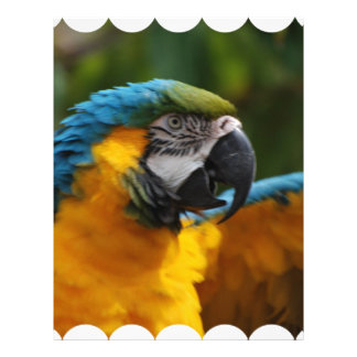 Ruffled Blue and Gold Macaw Letterhead
