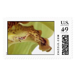 Ruffled Edge Stamp