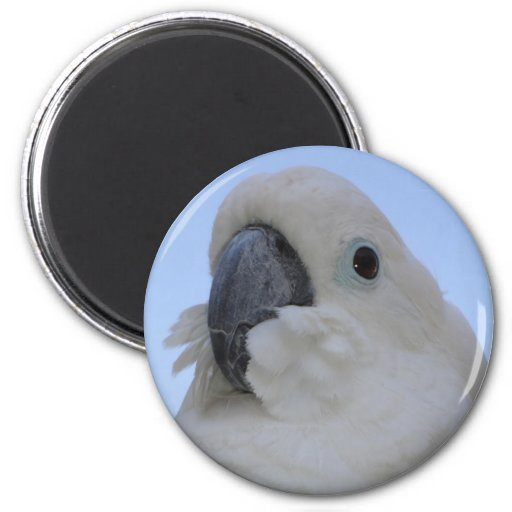 Ruffled Feathers 2 Inch Round Magnet