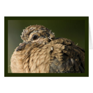 Ruffled Feathers Greeting Cards