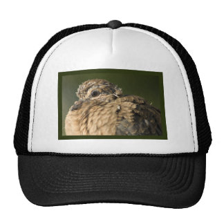 Ruffled Feathers Hat