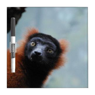 ruffled-lemur-6.jpg Dry-Erase boards