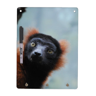 ruffled-lemur-6.jpg Dry-Erase whiteboard
