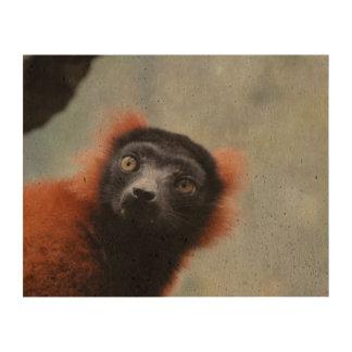 ruffled-lemur-6.jpg impresiones en corcho