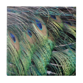 Ruffled Peacock Feathers With New Growth Ceramic Tile