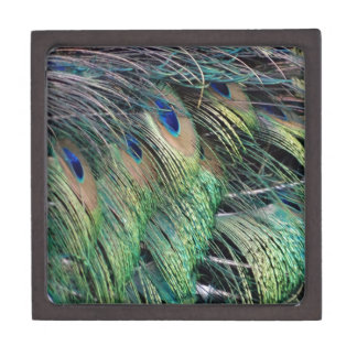 Ruffled Peacock Feathers With New Growth Jewelry Box