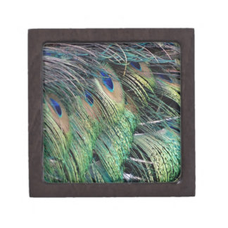 Ruffled Peacock Feathers With New Growth Keepsake Box
