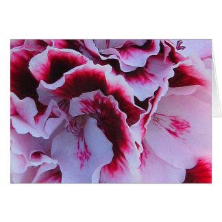 Ruffled Pelargonium Greeting Card