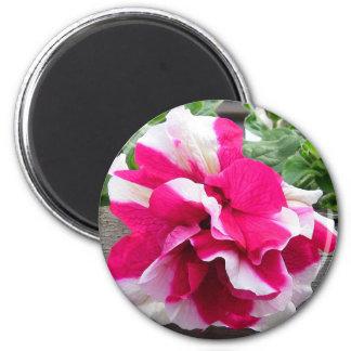 Ruffled Petunia Gift Magnet