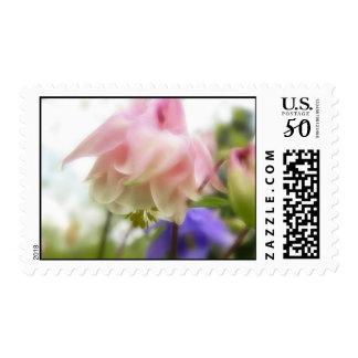 Ruffled Pink Aquilegia (Columbine) Postage