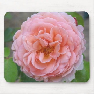 Ruffled Pink Rose Mouse Pads