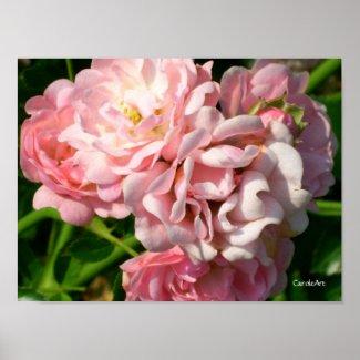 Ruffled Pink Roses Print