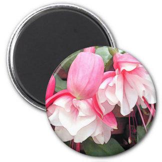 Ruffled Pink & White Fuchsias Magnet