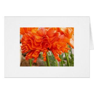 Ruffled Ranunculus Card