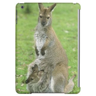 Rufogriseus de cuello rojo del Wallaby, del Macrop