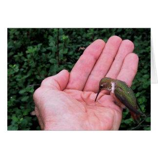 Rufous/Allen's Hummingbird • Joe Sweeney - card