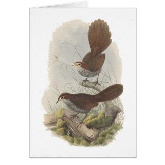 Rufous Bristle-bird Greeting Cards