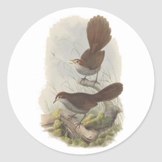 Rufous Bristle-bird Classic Round Sticker
