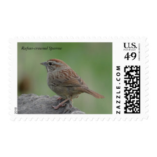 Rufous-crowned Sparrow Postage Stamp