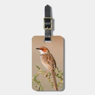 Rufous-Eared Warbler (Malcorus Pectoralis) Bag Tag