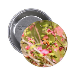 Rufous Hummingbird and Flowers Buttons