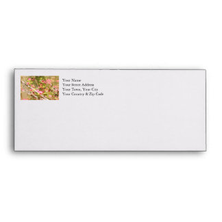 Rufous Hummingbird and Flowers Envelope