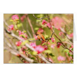 Rufous Hummingbird and Flowers Greeting Card