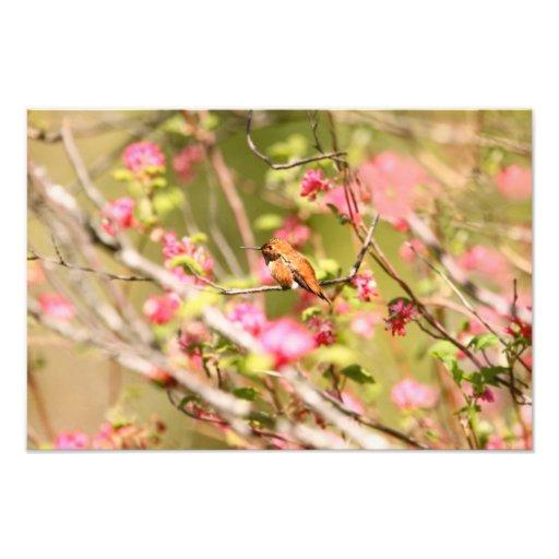 Rufous Hummingbird and Flowers Photo