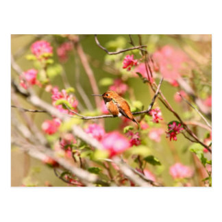 Rufous Hummingbird and Flowers Postcard