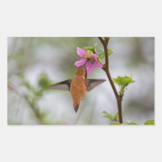 Rufous hummingbird at wild rose rectangular sticker