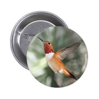 Rufous Hummingbird Pinback Button