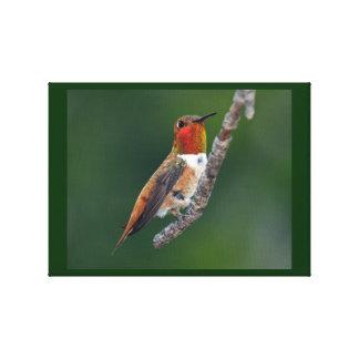Rufous Hummingbird Stretched Canvas Print