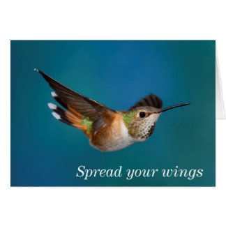 Rufous Hummingbird Card