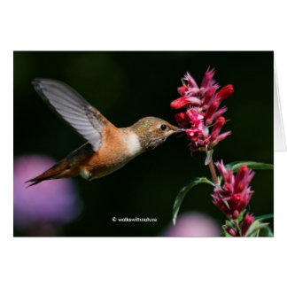 Rufous Hummingbird Feeding on the Anise Hyssop Card